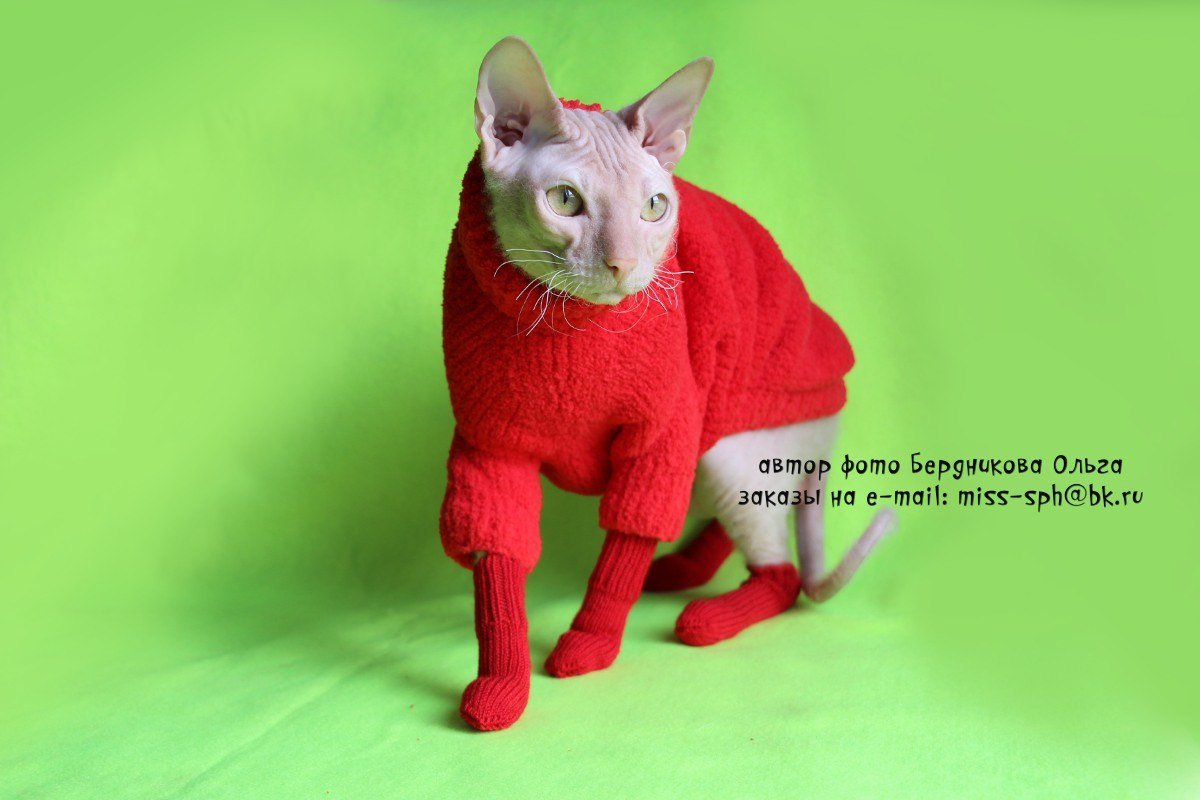 Носки для кошки своими руками 36